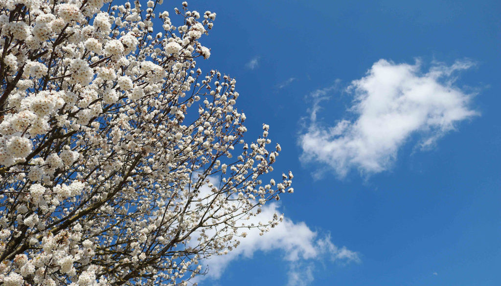 Coliarte | Wolken am Himmel