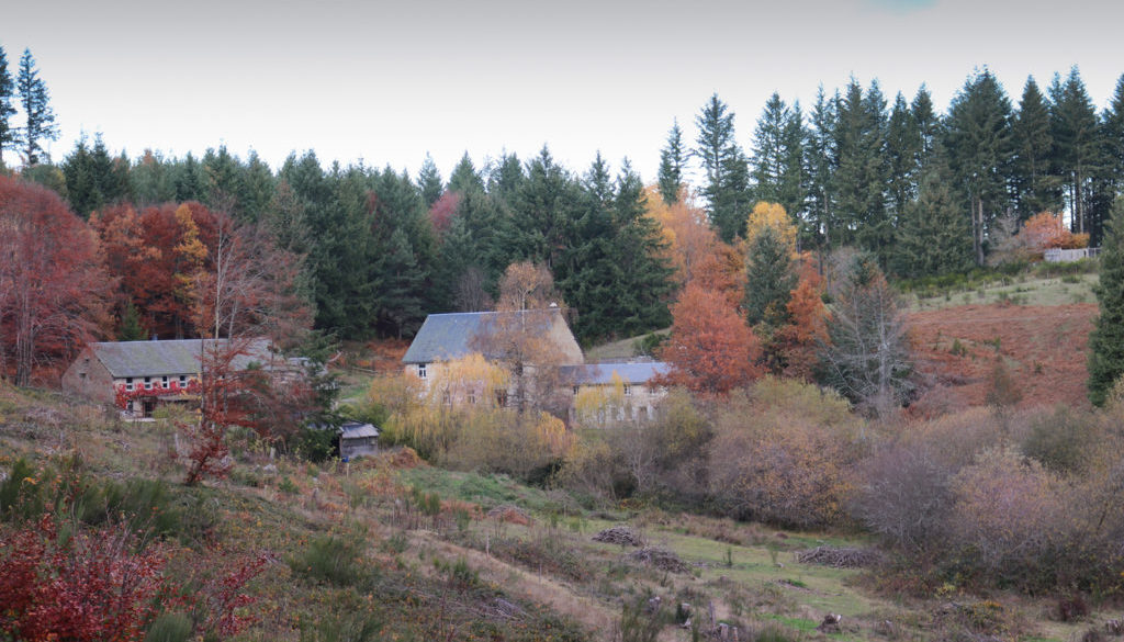 Coliarte | Herbst